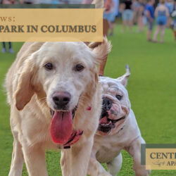 Fetch Dog Park in Columbus