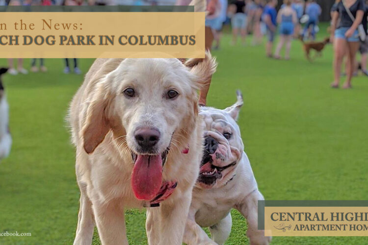In the News: Fetch Dog Park in Columbus